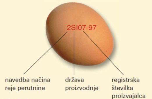 informações sobre o ovo